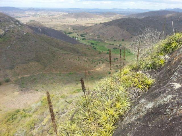 Parte da trilha e as macambiras!